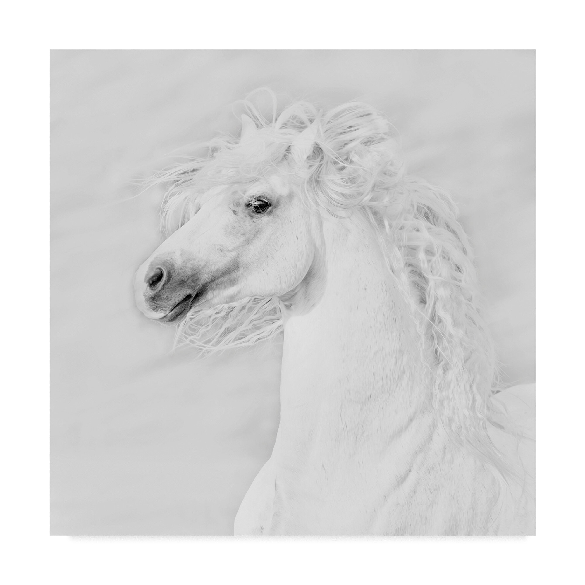 East Urban Home Black And White Horses Iii Graphic Art Print On Wrapped Canvas