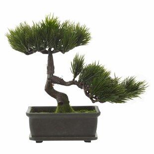 Bonsai Plant In Pot Image