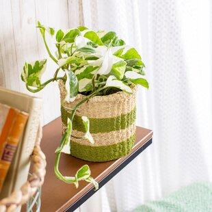 Cement Plant Pot Image