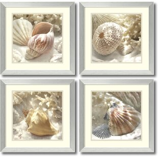 Coral Shell by Donna Geissler 4 Piece Framed Photographic Print Set by Rosecliff Heights