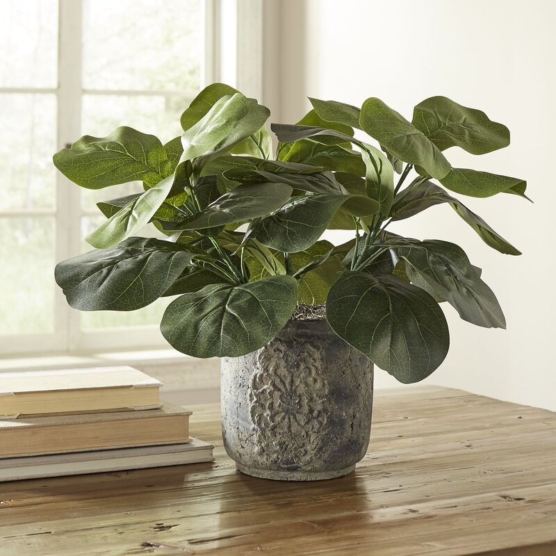 Three Posts  Planterted Fiddle Leaf Fig Desktop Plant in Planter