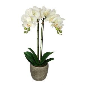 Synthetic Fabric Double-Stem Orchid