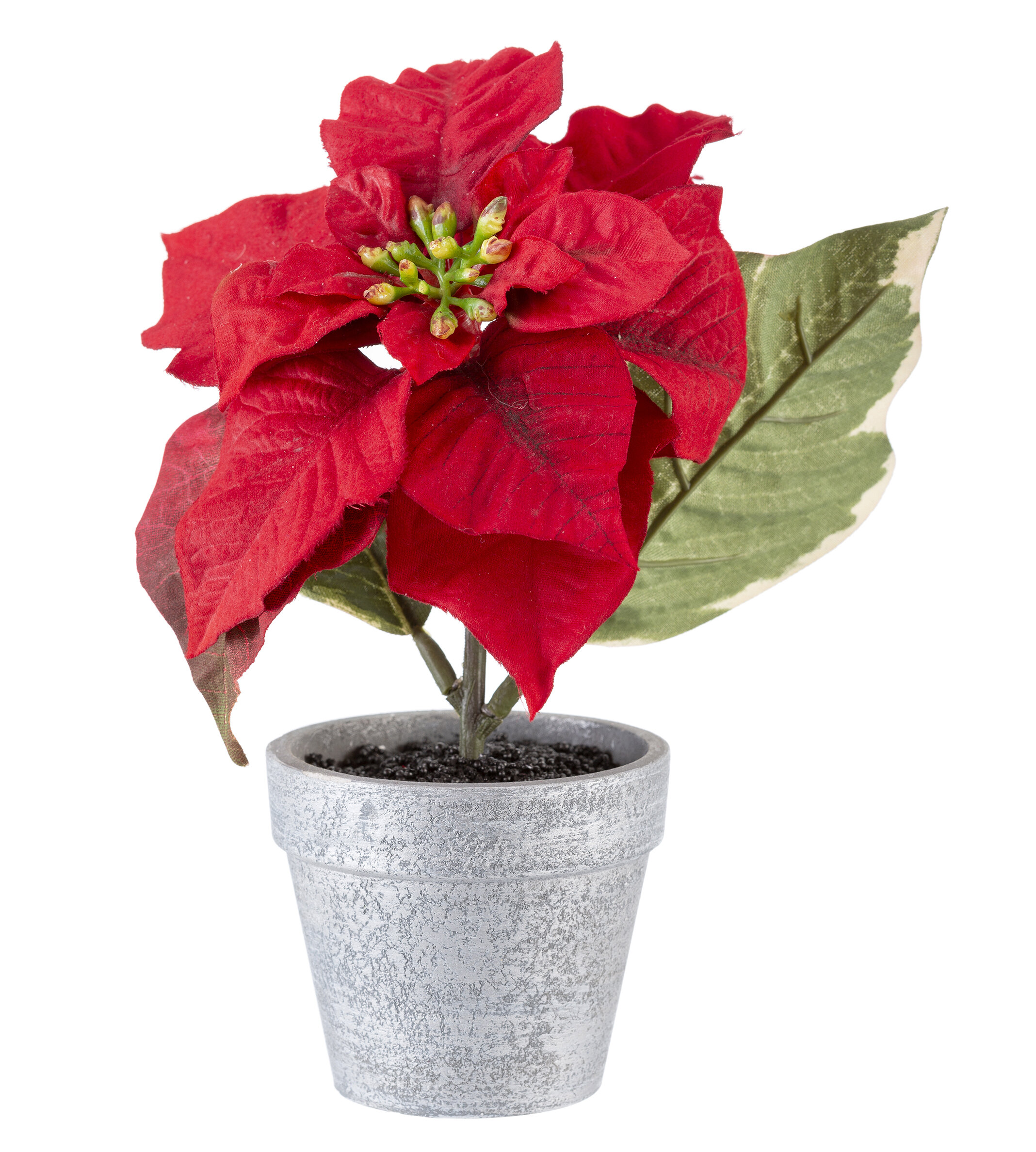 237 & Potted Poinsettia Floral Arrangements and Centerpieces in Pot