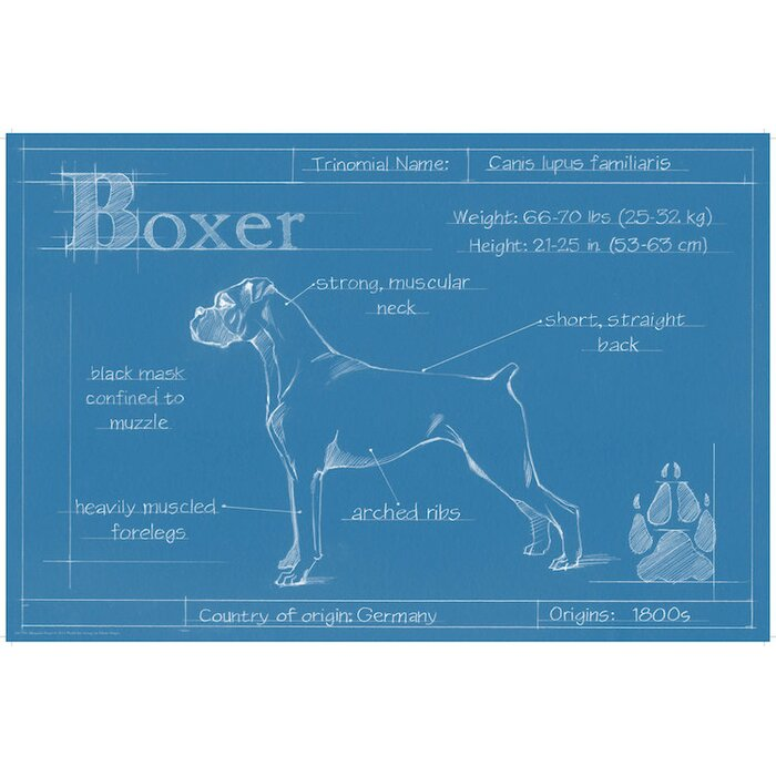 East urban home blueprint of a boxer drawing print on canvas blueprint of a boxer drawing print on canvas malvernweather Image collections