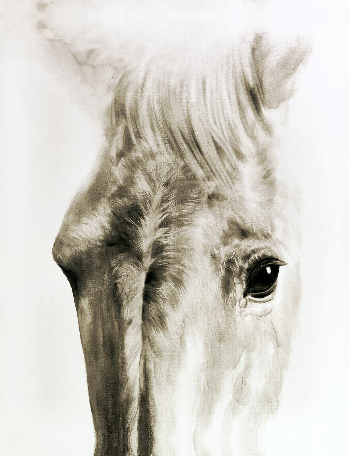 Union Rustic White Horse I Oil Painting Print On Wrapped Canvas