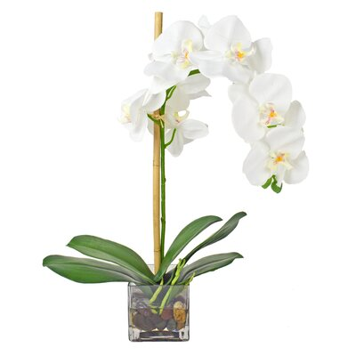 Langley Street Faux White Phalaenopsis Orchid in Acrylic Glass