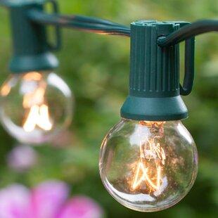 25 Light Globe String By Wintergreen Lighting