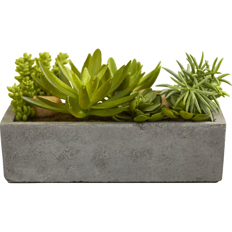 Langley Street  Floor Succulent Plant in Concrete Planter