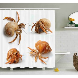 Bulfinch Crabs Sea Animals Theme Set of Hermit Crabs From Caribbean Sea Digital Print Shower Curtain + Hooks