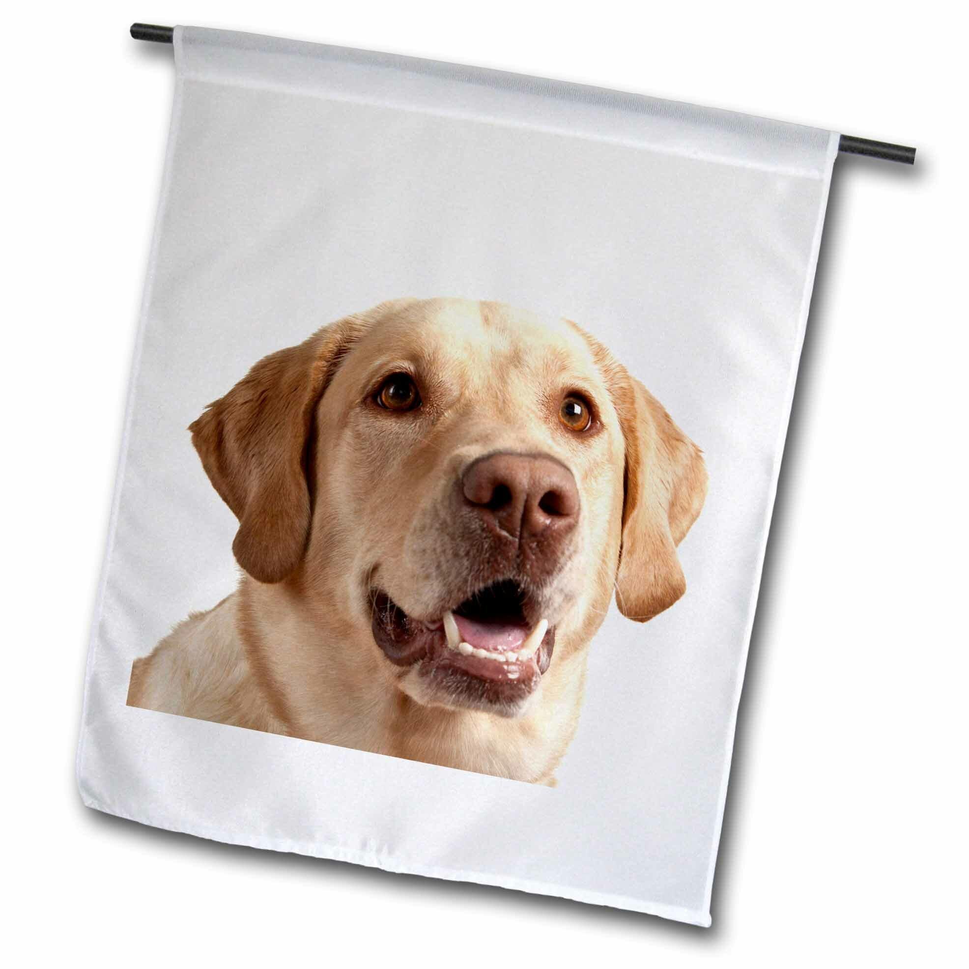 Red Barrel Studio Oregon Keizer Labrador Retriever Dog Polyester 18 X 12 In Garden Flag Wayfair