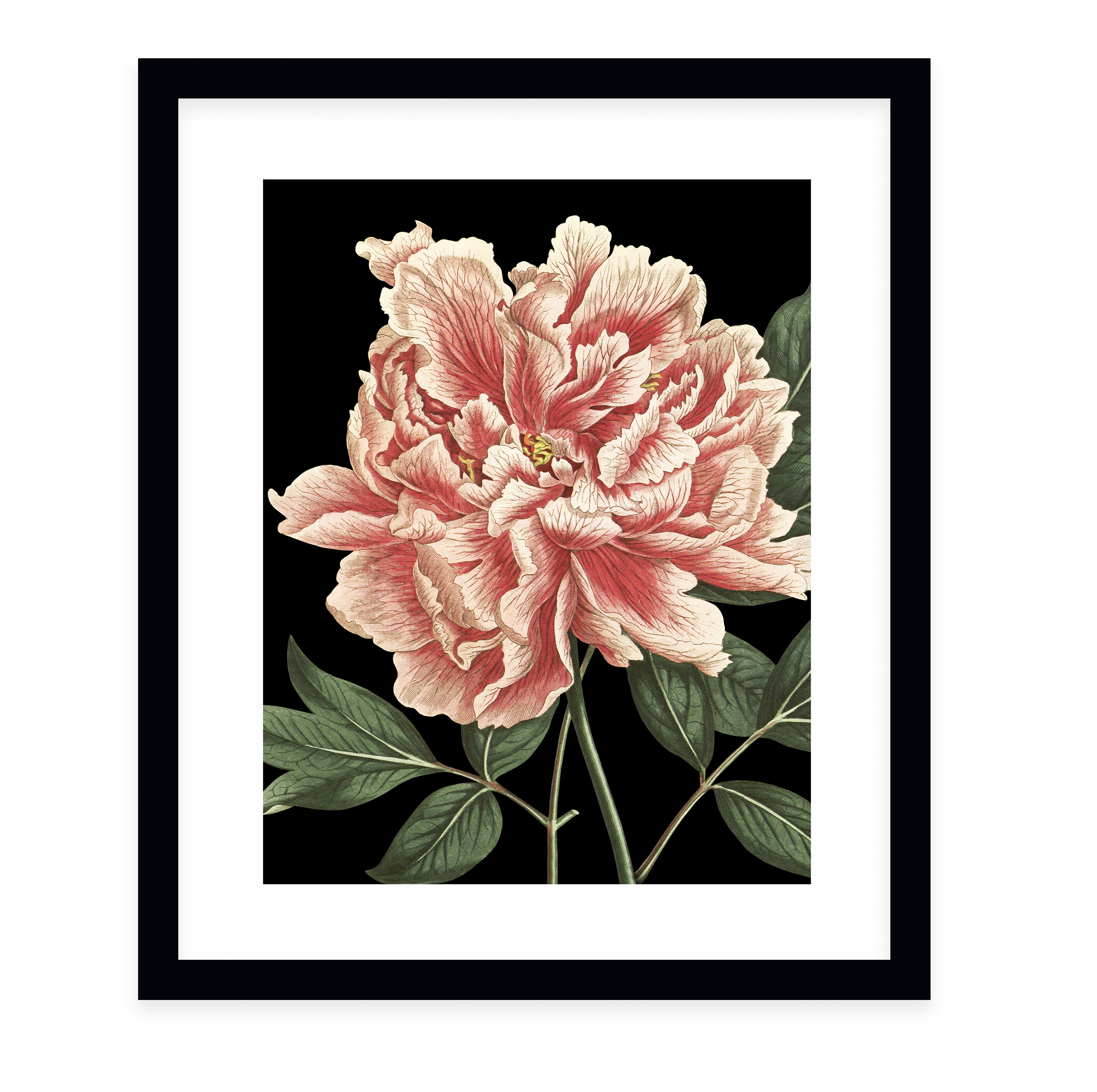 Charlton Home Flower One Black By Terri Ellis Picture Frame Graphic Art Print On Paper Wayfair