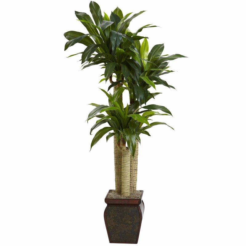 Beachcrest Home Cornstalk Draceana Tree With Decorative Vase