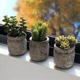 3 - Piece Artificial Succulent in Pot Set (Set of 3)