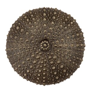 Comparison Sea Urchin Round Knob By Acorn