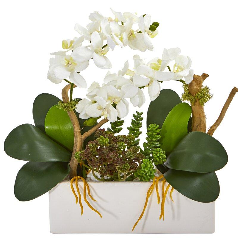 floral home decor orchid floral design wayfair.htm house of hampton artificial phalaenopsis succulent orchid floral  artificial phalaenopsis succulent