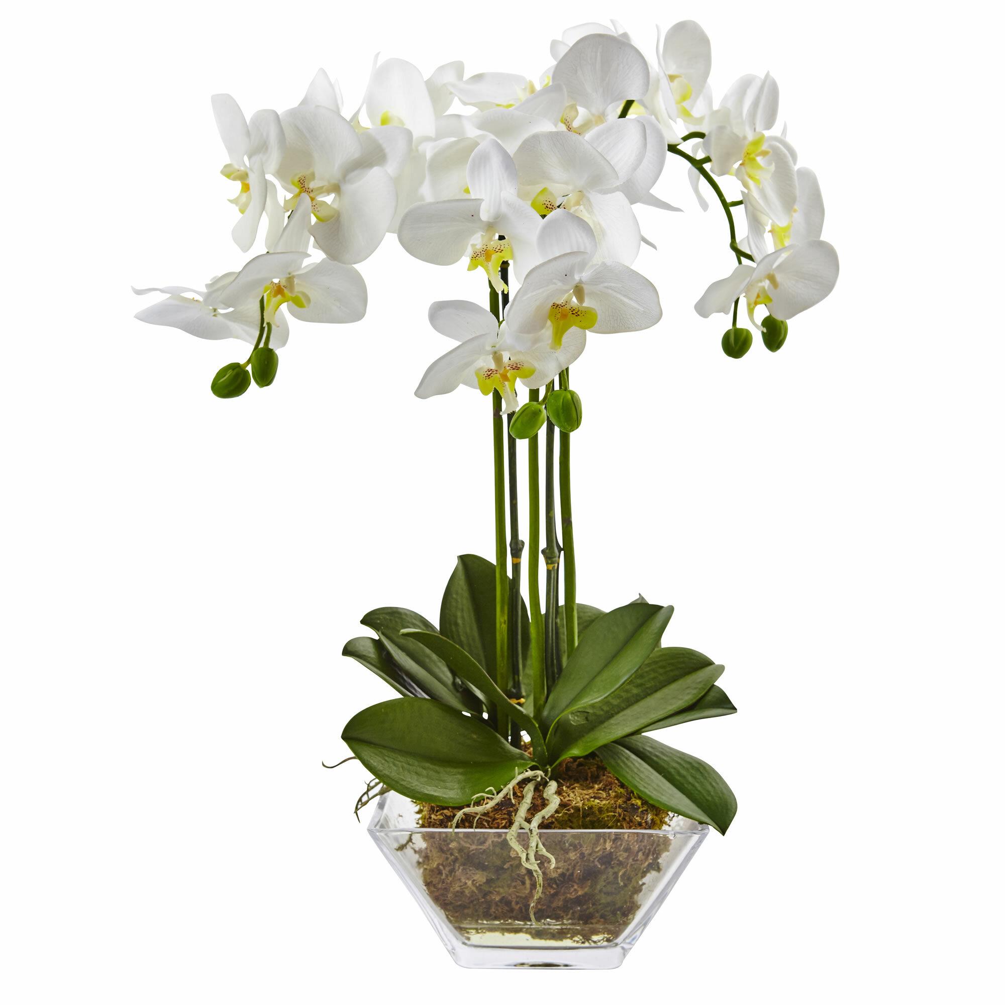 Charlton Home Triple Phalaenopsis Orchid Floral Arrangement In Vase Reviews Wayfair