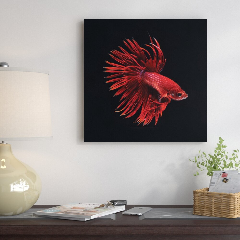 East Urban Home \'Red Betta Fish\' Graphic Art Print on Canvas | Wayfair