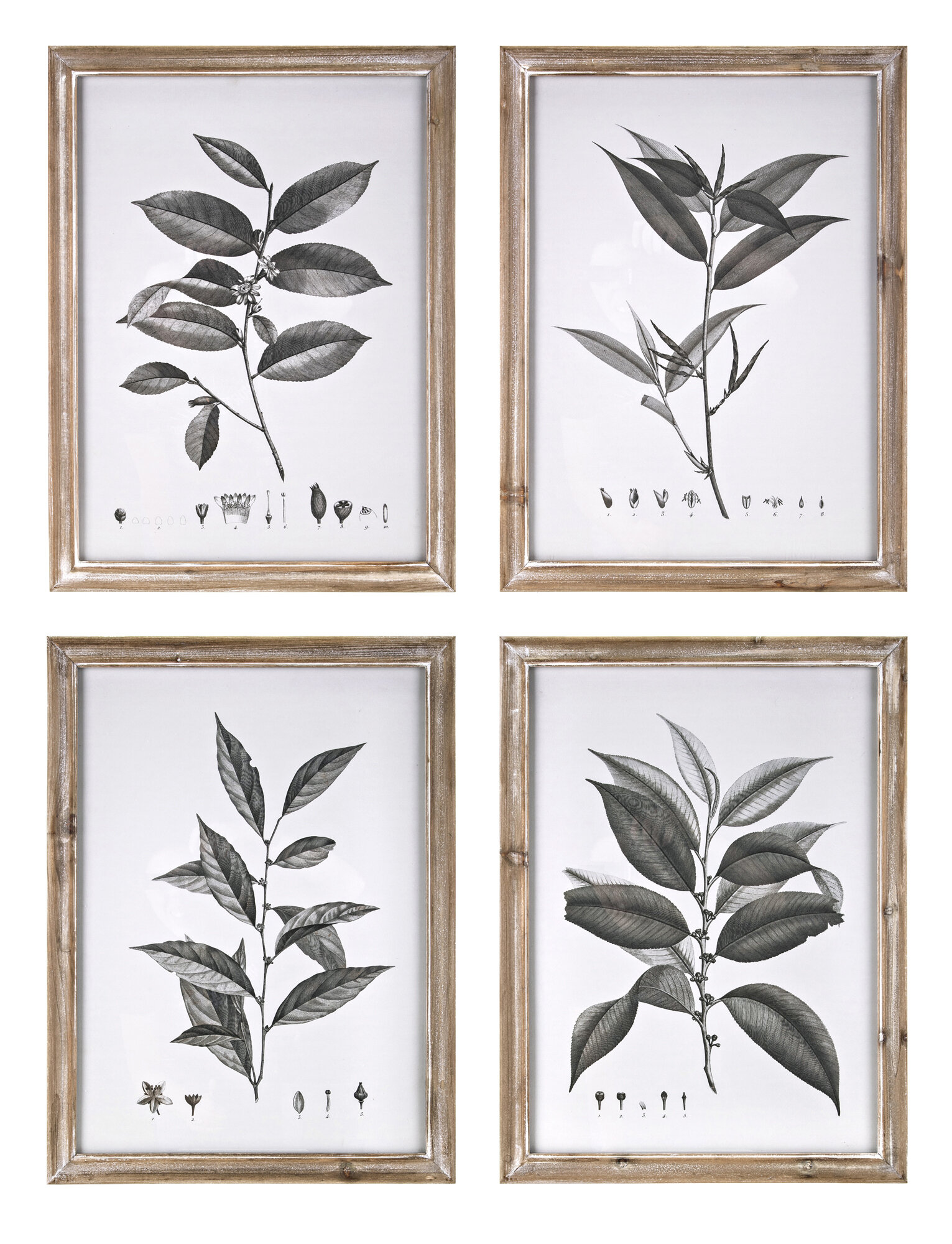 Aba botanical 4 piece framed graphic art print set reviews joss main