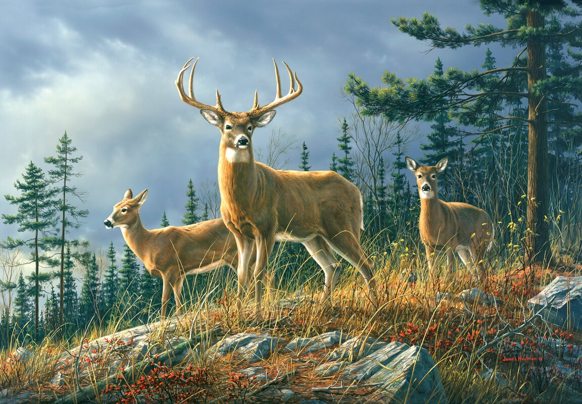 Wildlife wall mural images home wall decoration ideas wallpops ideal decor autumn whitetail wall mural reviews wayfair ideal decor autumn whitetail wall mural amipublicfo amipublicfo Gallery