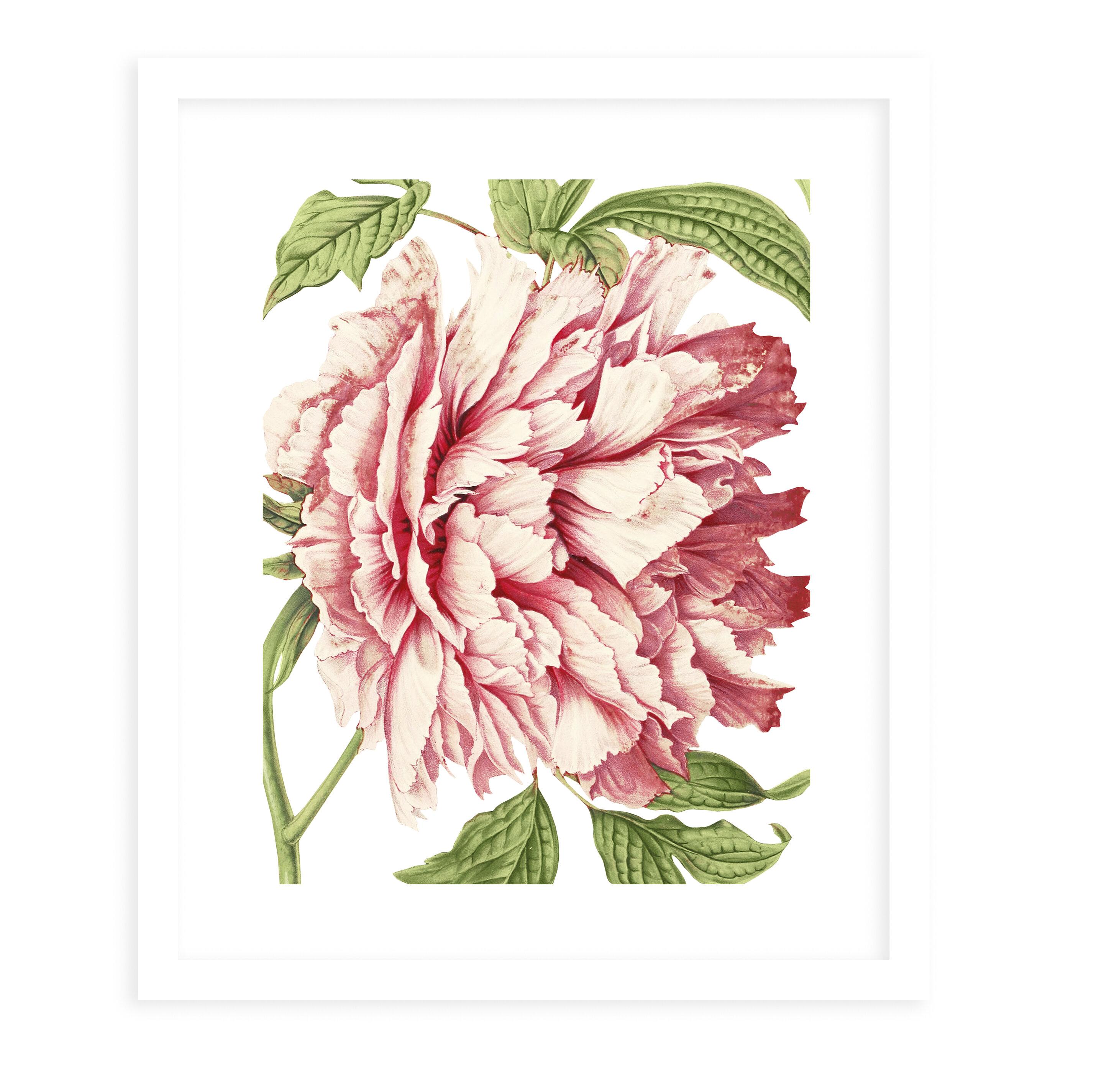 Charlton Home Flower Fourteen White Byterri Ellis Picture Frame Graphic Art Print On Paper Wayfair