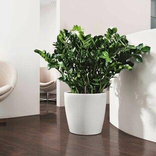 Lechuza Plastic Plant Pot By VidaXL