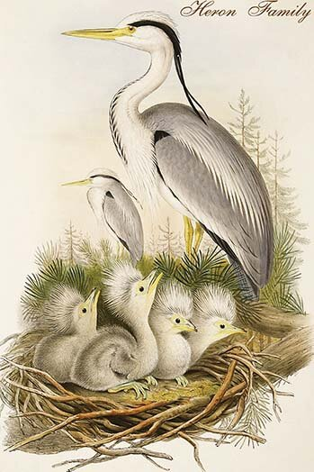 Buyenlarge Heron Family Graphic Art Print Wayfair