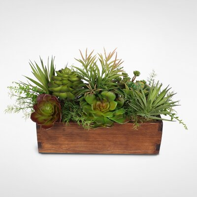 17 Stories Artificial Desktop Echeveria and Sedum Succulent in Planter