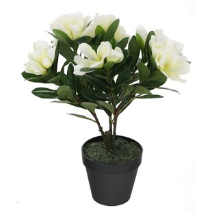 Floor Alpine Rhododendron Plant In Pot By Marlow Home Co.