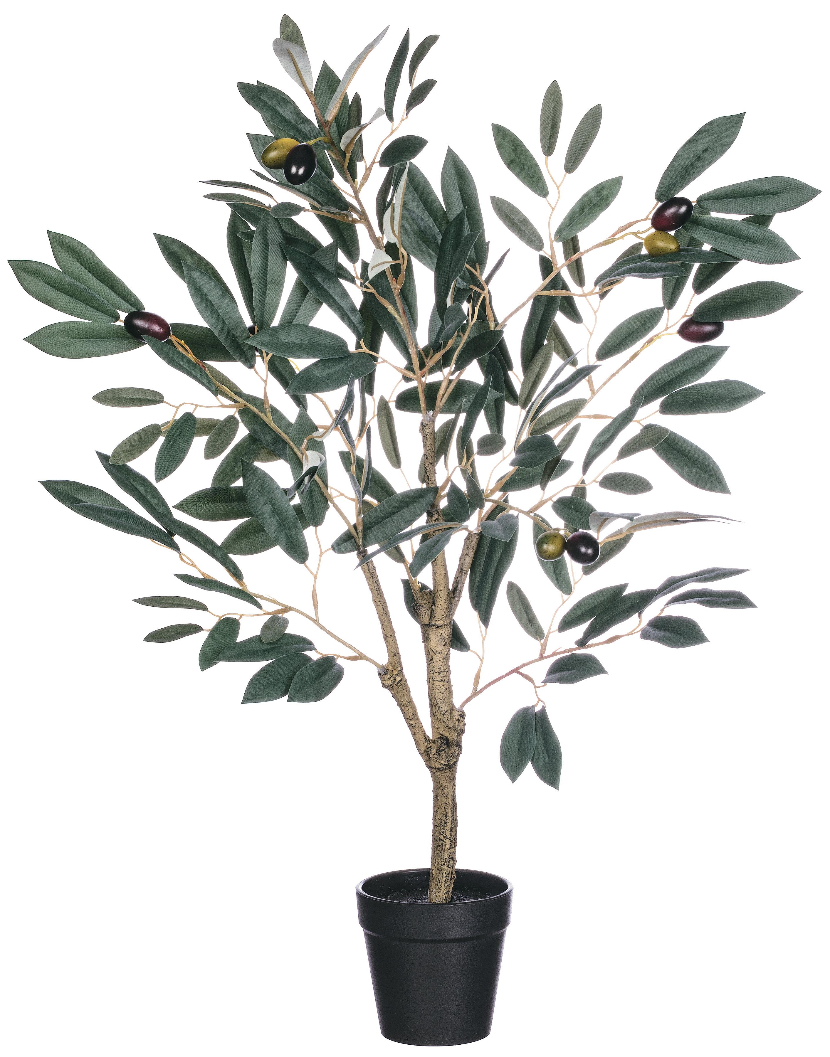 Fleur De Lis Living Olive Tree In Pot Reviews Wayfair