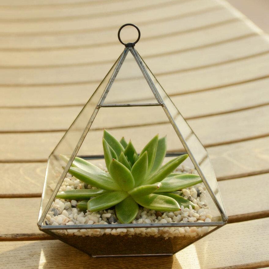 Dingading Glass Terrarium Wayfair Co Uk