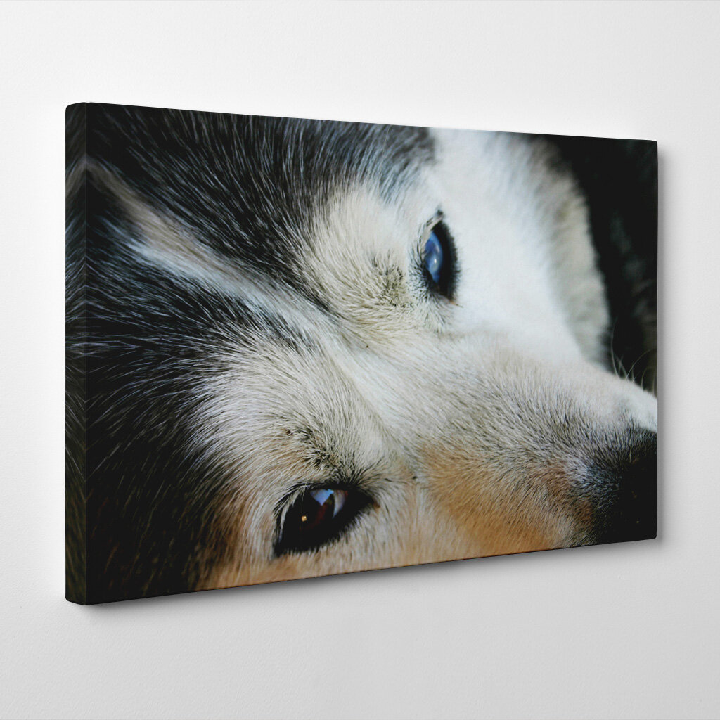Home Decor Home Of Siberian Husky Dogs Playing Poker Canvas Wall Art Home Furniture Diy Construirnolitoral Com Br