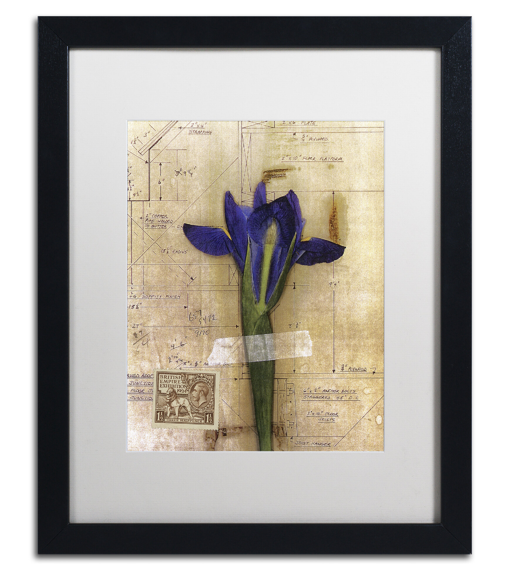 Trademark Art Iris Plan By Nick Bantock Framed Graphic Art Wayfair