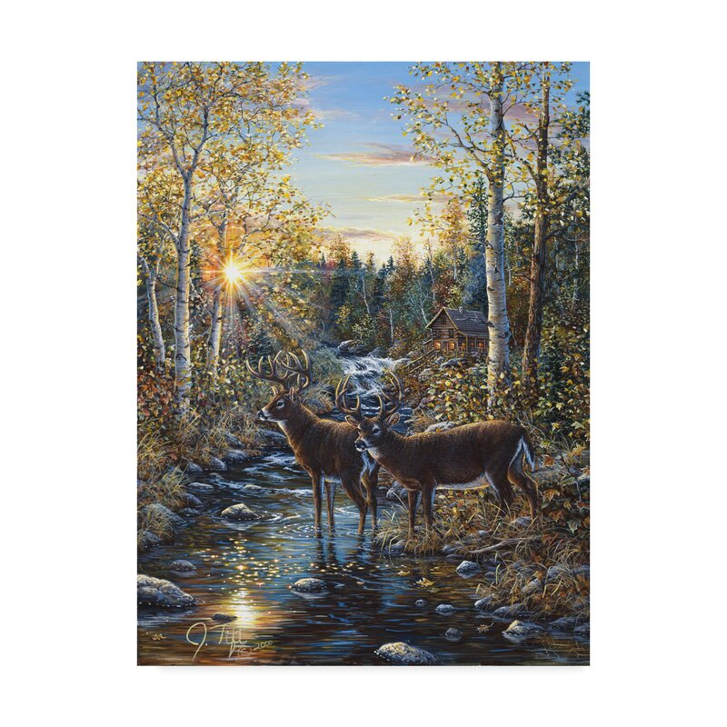 Trademark Art Jeff Tift Whitetail Deer Graphic Art Print On Wrapped Canvas Reviews Wayfair Ca