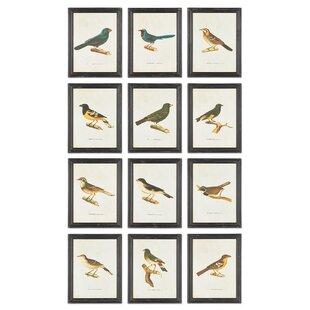 Bird 12 Piece Framed Graphic Art Set