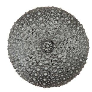Sea Urchin Round Knob
