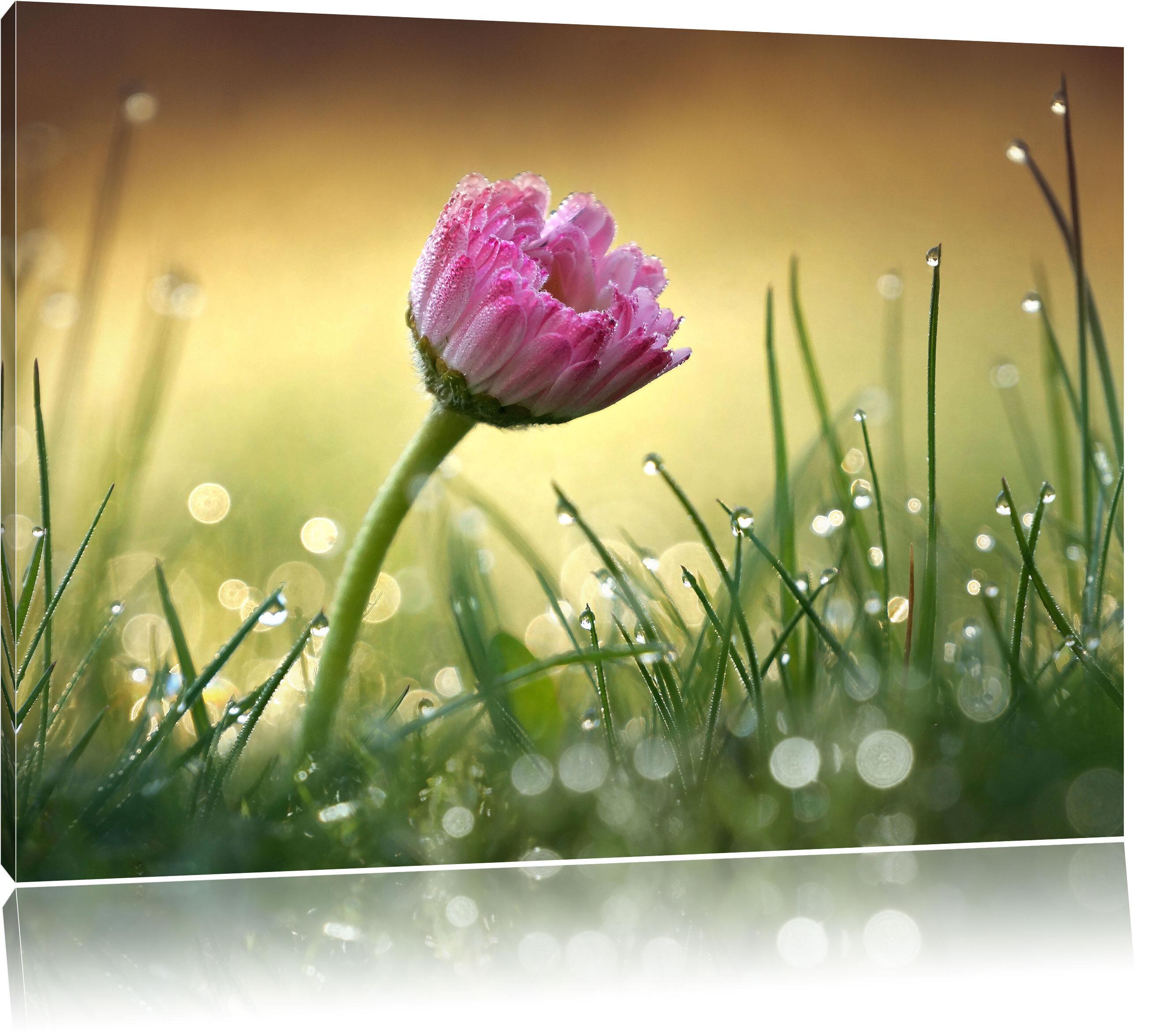 Home Loft Concept Pink Daisy in Grass Wall Art on Canvas | Wayfair.co.uk