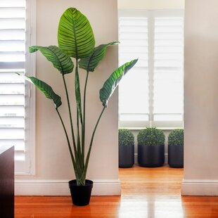 """60"""" Artificial Palm Tree in Pot"""