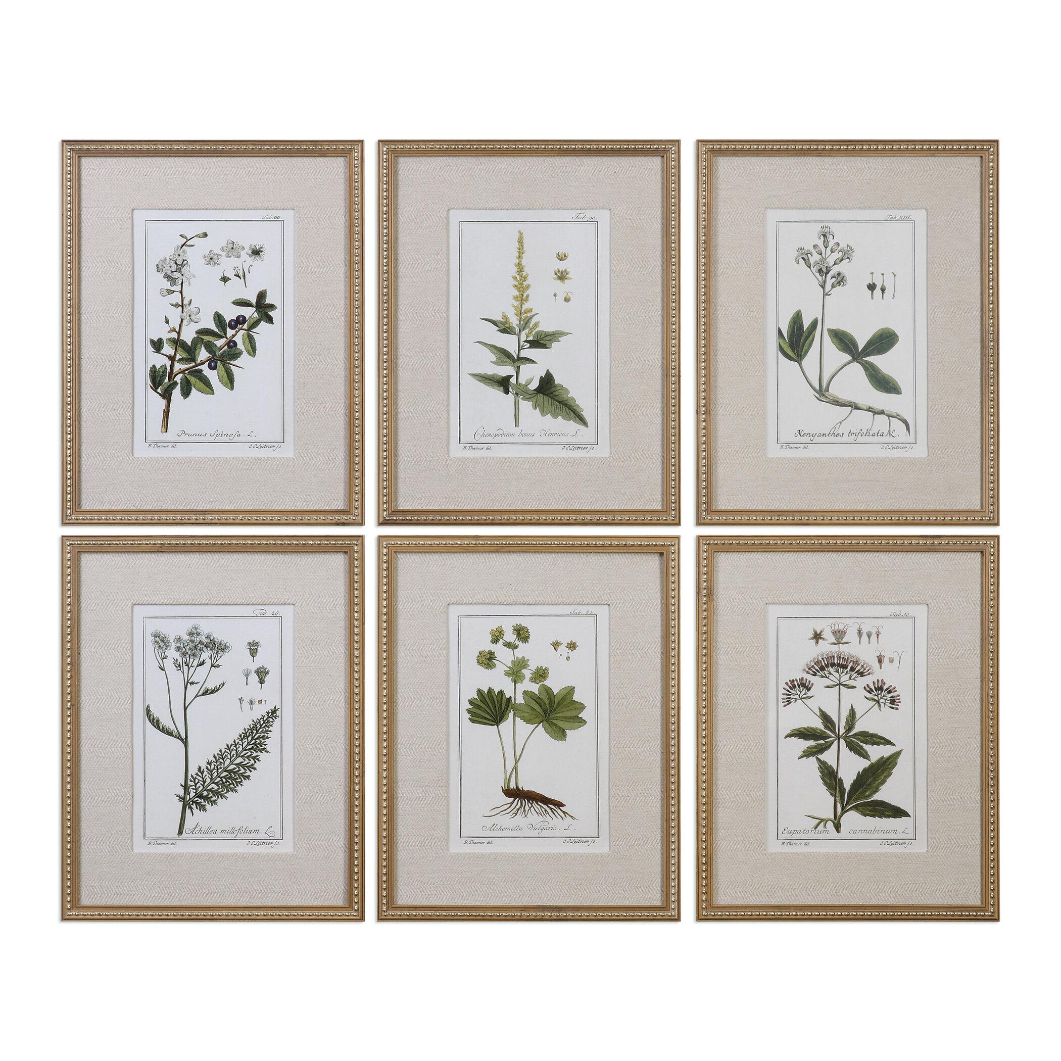 Three Posts \'Floral Botanical Study\' 6 Piece Framed Graphic Art Set ...