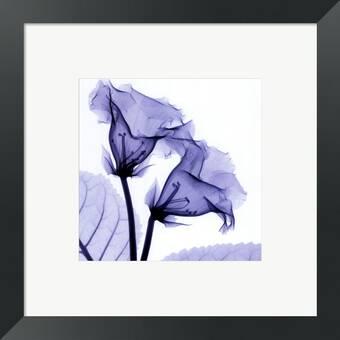 Evive Designs Small Orchid Opulence Ii P By Jennifer Goldberger Framed Graphic Art Wayfair