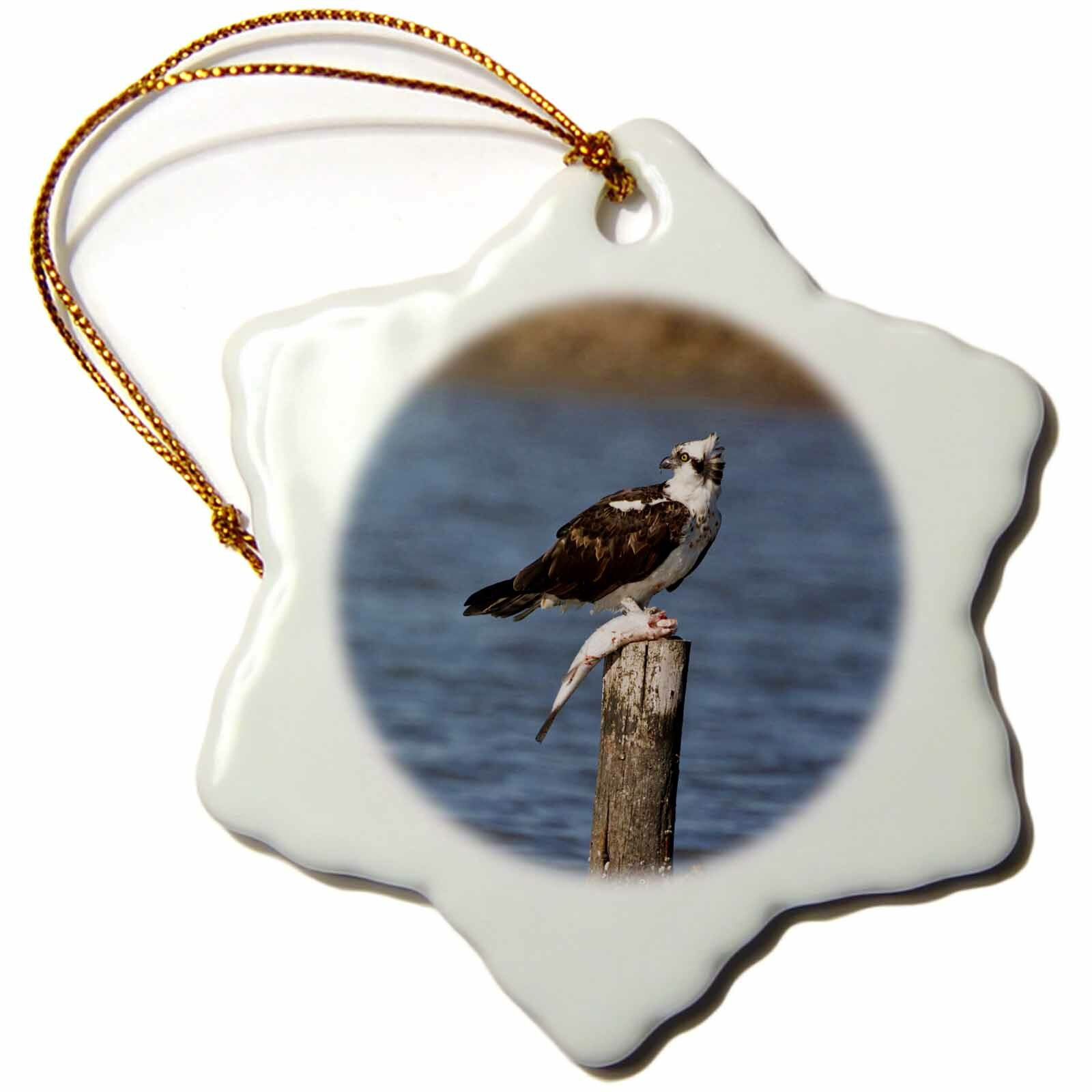 The Holiday Aisle Osprey Bird Pandion Haliaetus With Fish Texas Usa Snowflake Holiday Shaped Ornament Wayfair