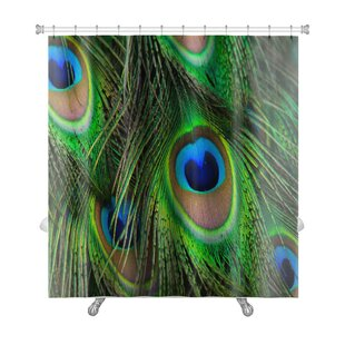 Animals Bright Peacock Feather Premium Single Shower Curtain