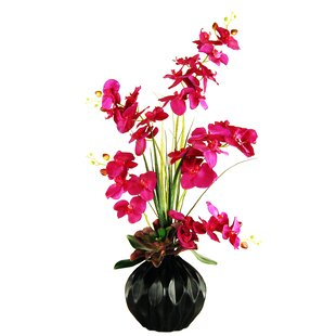 Phalaenopsis Orchids and Succulent Garden in a Fluted Vase