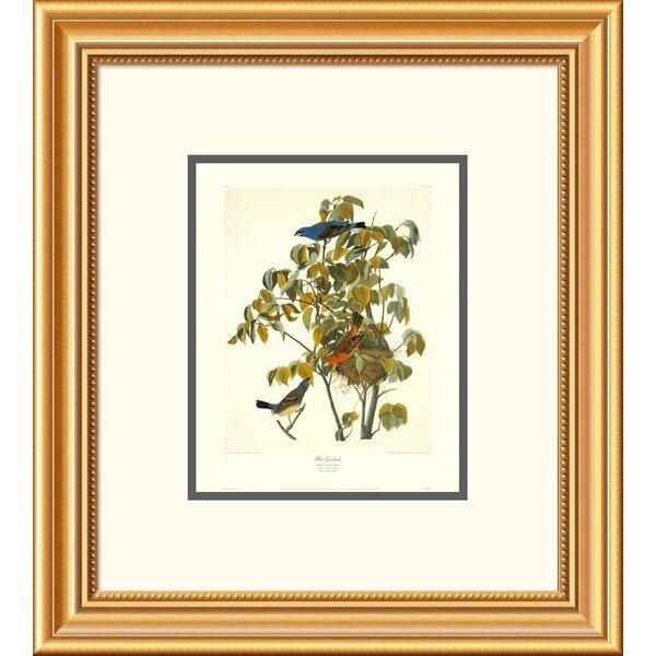 Global Gallery Blue Grosbeak By John James Audubon Framed Painting Print Wayfair