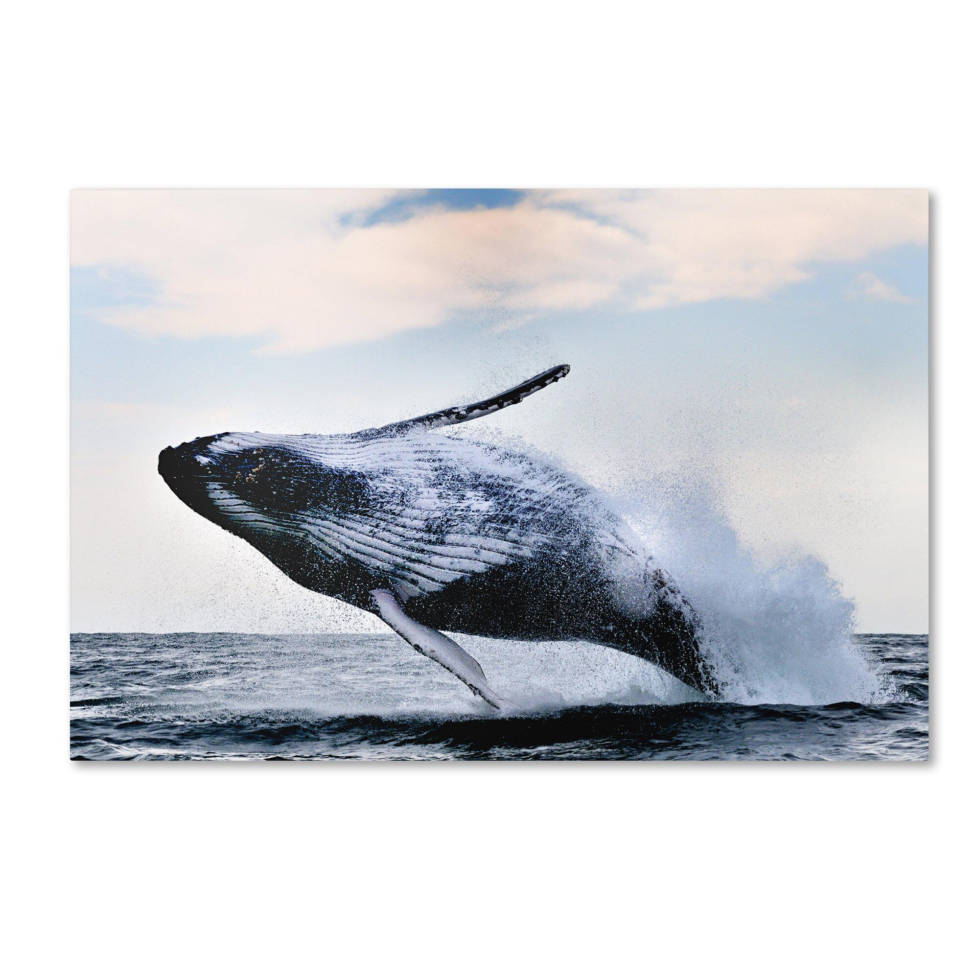 Trademark Art Breach Photographic Print On Wrapped Canvas Wayfair