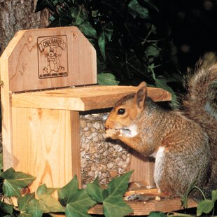 Chuck-A-Nut Products Squirrel Feeder