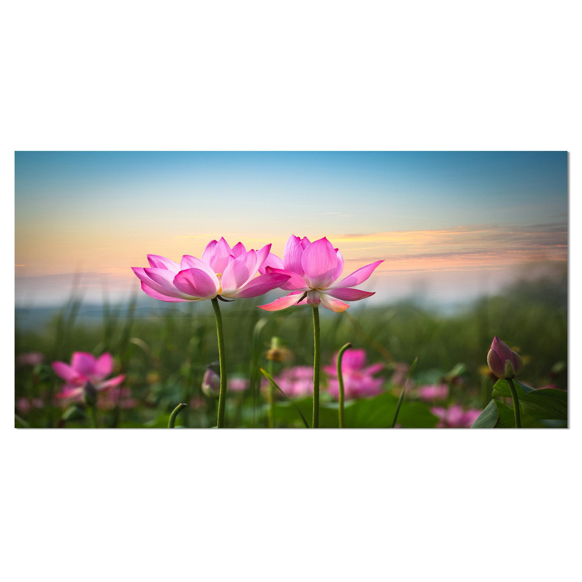 Designart blooming lotus flowers at sunset graphic art on wrapped designart blooming lotus flowers at sunset graphic art on wrapped canvas wayfair izmirmasajfo