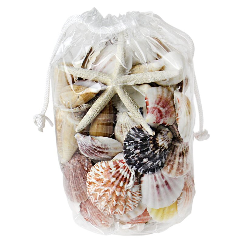 Beach Sea Shells Vase Fillers Reviews Birch Lane