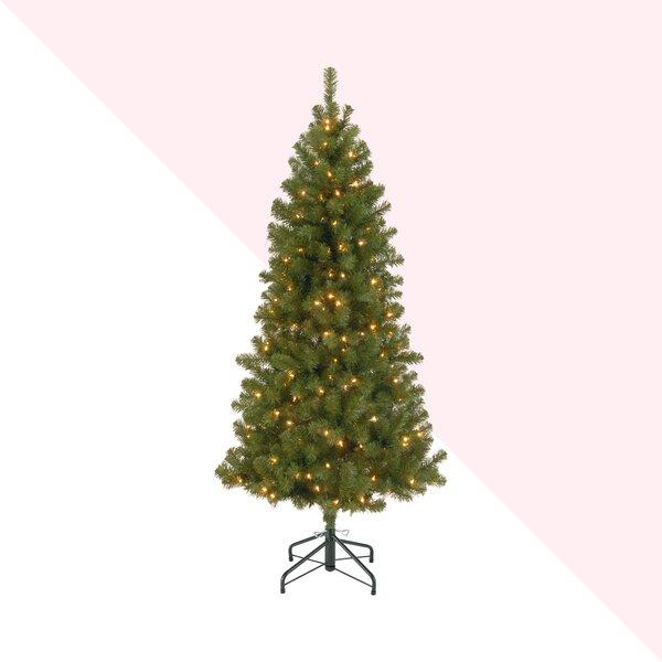 Hashtag Home Canadian Fir 7 Green Fir Artificial Christmas Tree With 300 Clear White Lights Reviews Wayfair
