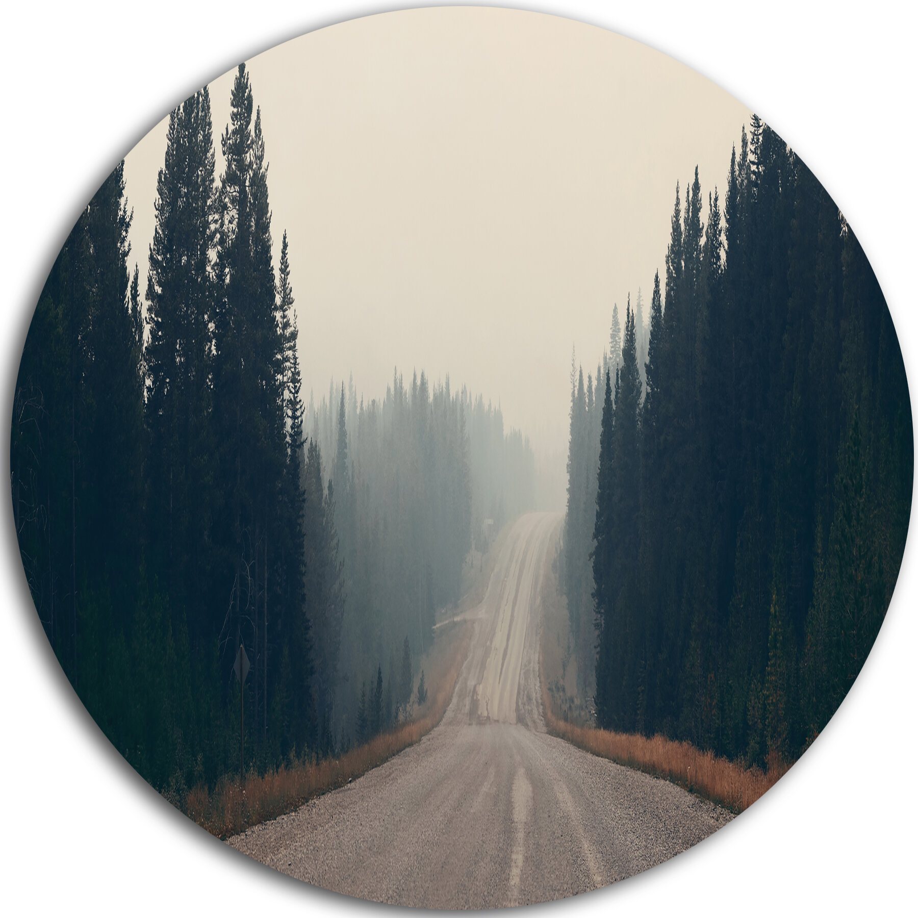 Designart Foggy Road In Forest In Banff Park Photographic Print On Metal Wayfair