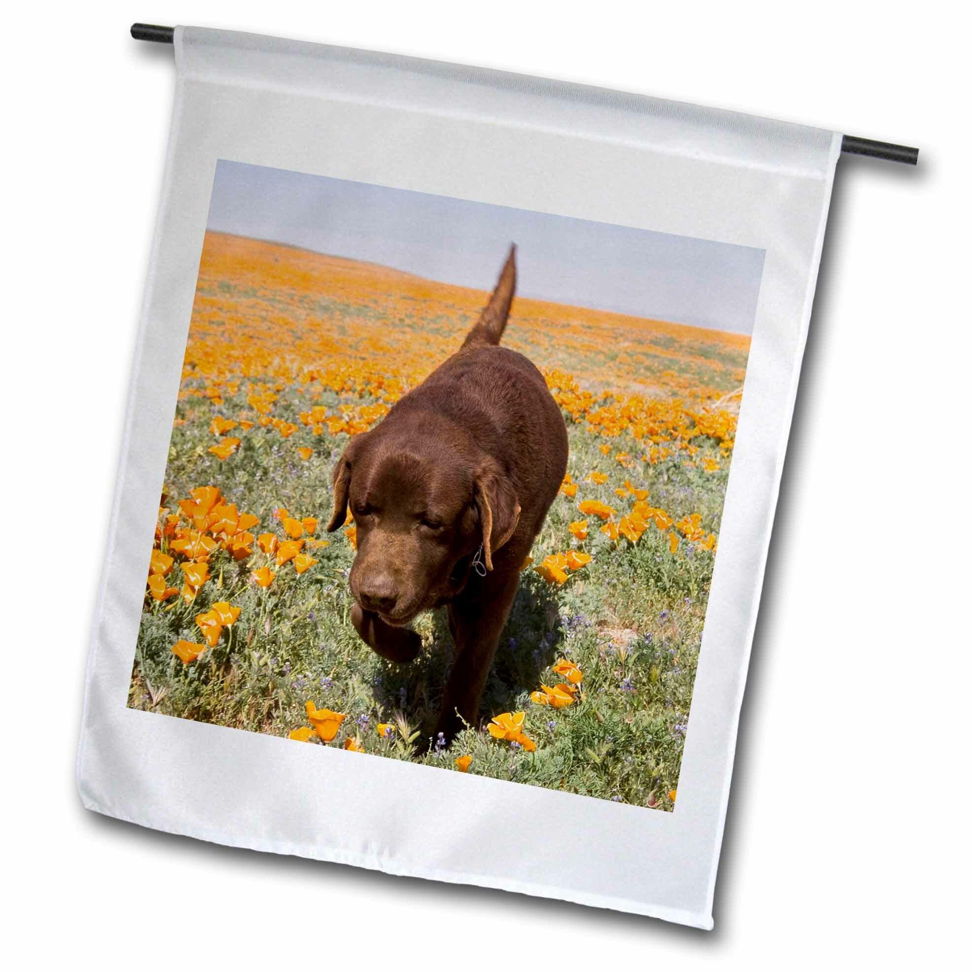 3drose Chocolate Labrador Retriever Dog Polyester 18 X 12 In Garden Flag Wayfair